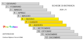 Carduus litigiosus [Cardo controverso] - Flora Italiana