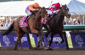 Breeders Cup Charts 2013 Beholder And Songbird Fight To The Finish In Breeders Cup