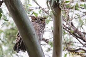 Image result for huntington central park birds