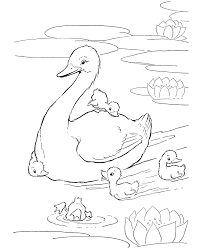 Small Picture Farm animal coloring page Ducks in the pond ANIMALS TEMPLATES