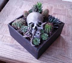 Small Picture The 25 best Mini cactus garden ideas on Pinterest Mini cactus