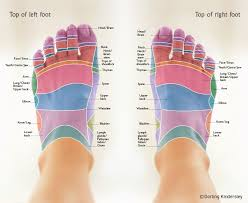 Reflexology Foot Maps To Maximise Your Massage Foot