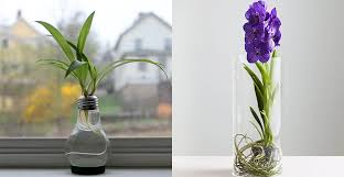 indoor water garden the how to guide to decorating with horticulture
