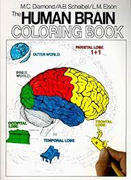 Number worksheets to learn numbers and counting. The Human Brain Coloring Book Coloring Concepts Diamond Marian C Scheibel Arnold B Amazon Com Books