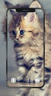 kitten wallpapers 4k hd kitten cats wallpaper screenshot 10