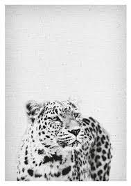 leopard print animal print leopard
