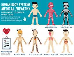 Body Systems Chart Human Body Systems Annual Checkup Anatomy Body Organ Chart