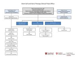 Stanford University Organizational Chart Division Organizational Chart Division Of Stem Cell