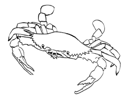 Small Picture Cool Crab Coloring Pages Cool And Best Ideas 2675 Unknown