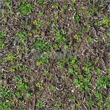 Soil With The Sprouted Grass Texture Seamless