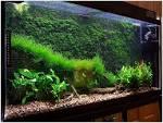 Мхи в аквариуме своими руками