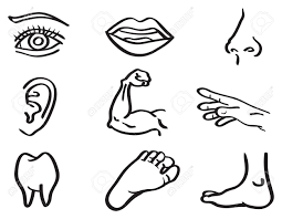Small Picture Human Parts Of Body Drawing Images Body Outline Coloring Book