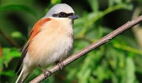 Seit 1970 wird in deutschland jedes jahr ein neuer vogel gewählt. Neuntoter Vogel Des Jahres 2020 Umweltnetz Schweiz