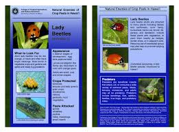Beneficial Insects Chart University Of Hawaii Master Gardener Program