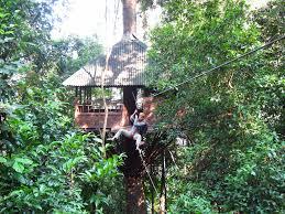 kids tree houses with zip line.  Zip Laos Treehouse Hotel Zipline Throughout Kids Tree Houses With Zip Line D