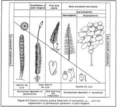 Plant Life Cycle Flow Chart 16 Specific Life Cycle Of Laminaria Flowchart
