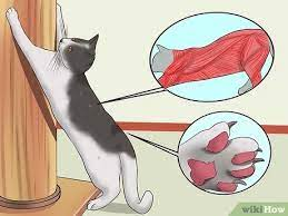 4 Ways To Stop A Cat From Clawing Furniture Wikihow