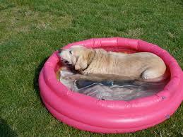Όλη τη μέρα στη πισίνα...