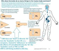 what can marijuana do to you