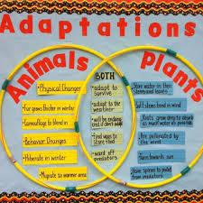 Plant And Animals Adaptations Venn Diagram Use A Venn Diagram To Demonstrate Animal And Plant Adaptations