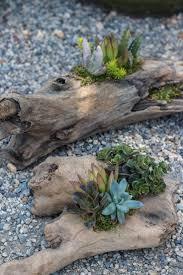 New driftwood beauties in the garden today. http://shop.rogersgardens.