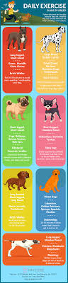 Daily Exercise Guide By Breed Infographics
