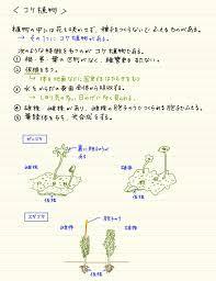 コケ 植物 特徴
