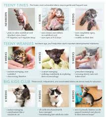 Kitten Socialization Chart 42 Unbiased Growth Chart For Kittens