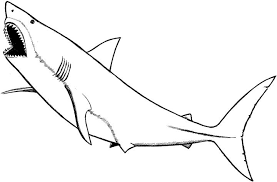Small Picture Valuable Ideas Coloring Page Of A Shark Basking 2