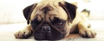 7 home remes for ringworm in dogs naturalalternativeremedy