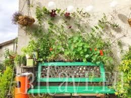 Make A Cucumber Tent Trellis  Bonnie PlantsClimbing Plant Trellis