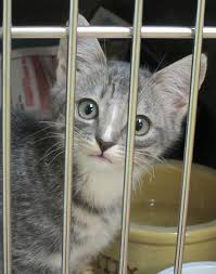animal shelter kittens. Exellent Shelter PAWS Has Many Beautiful Kittens Available For Adoption With Animal Shelter Kittens I