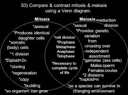 Comparing Mitosis And Meiosis Venn Diagram Mitosis Vs Meiosis Venn Diagram Worksheet Answer Key Under