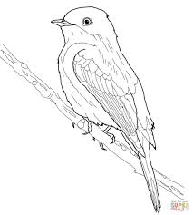 Eastern Phoebe Coloring Page Free Printable Coloring Pages Birds