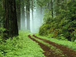 Image result for winding path