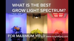 Best Led Light For Plant Growth What Is The Best Grow Light Spectrum