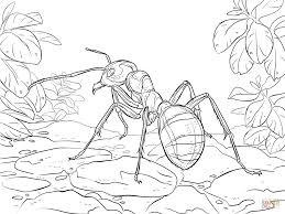 Small Picture Ants coloring pages Free Coloring Pages