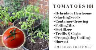 Tomato Seed Growth Chart Tomatoes 101 A Quick Start Guide For Beginners Empress Of