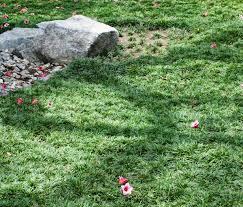 The Dwarf Mondo Grass Design