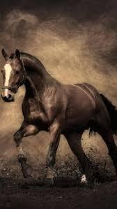 horses wallpaper hd. Beautiful Wallpaper Best HD Horses Wallpapers For IPhone 5 For Wallpaper Hd F