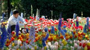 new kcet doentary invites viewers to get lost in descanso gardens l a story