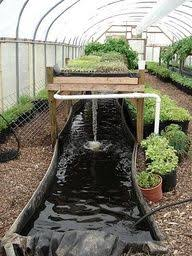 aquaponic gardening. how to diy aquaponics - the guide on building your very own aquaponic system gardening e