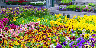 Small Picture 9 Gardening Trends That Are Going to Be Huge In 2017 New Garden