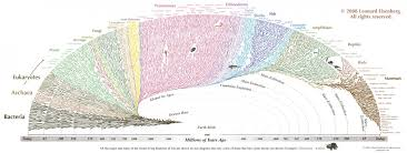 Beautiful Chart This Hypnotically Beautiful Chart Shows All Life On Earth