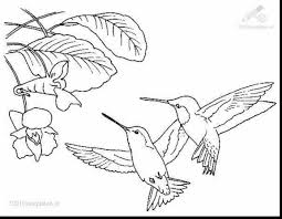 Small Picture Best Hummingbird Flower Coloring Pages Photos New Printable