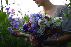 ask the expert 7 tips to grow cut flowers in a tiny garden from floret farm gardenista