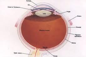 lens implants anderson eye surgery