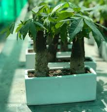 11 best feng s plants in india