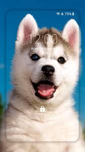 Husky dog Wallpaper HD : backgrounds ...
