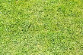 grass field texture. Green Grass Texture From A Field, Stock Photo Field E